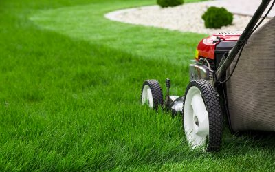 5 Tips to Keep Your Lawn Green During Summer